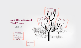 Special Circulations and Blood Pressure