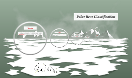 Polar Bear Classification