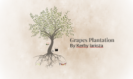 Plantation Project:Grapes