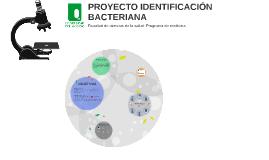 Copy of PROYECTO IDENTIFICACIÓN BACTERIANA