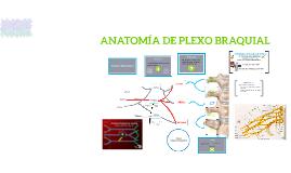 ANATOMIA DE PLEXO BRAQUIAL