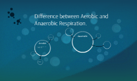 Difference between Aerobic and A
