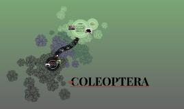 Copy of COLEOPTERA
