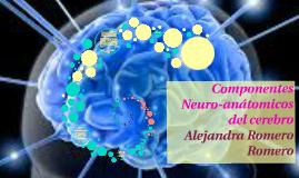 Componentes Neuro-anátomicos del cerebro
