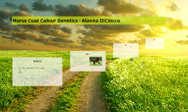Horse Coat Colour Genetics - Alanna DiCiocco