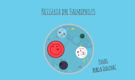 Neisseria dhe Haemophilus