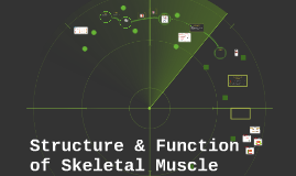 Structure & Function of Skeletal Muscle