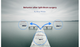 Copy of Behavior After Split-brain surgery