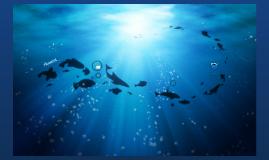 Copy of Aquarist