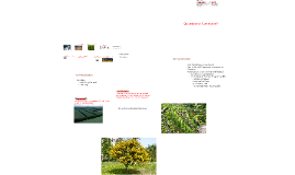 Copy of Soil Resources
