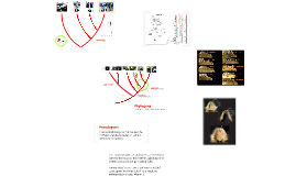 Homology and primate phylogeny