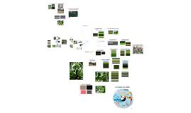 Copy of Les Jardins Permanents