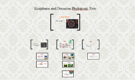 Kingdoms and Domains Phylogeny Tree