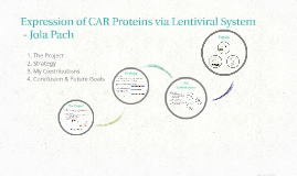 Expression of CAR Proteins via Lentiviral System