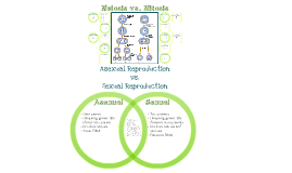 Comparing the Events of Meiosis and Mitosis