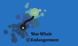 Blue Whale Endangerment