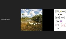 Everglades - MBF 2018