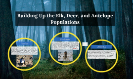 Building Up the Elk, Deer, and Antelope Populations