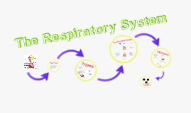 Duncan Respiratory System