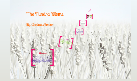 Copy of The Tundra Biome