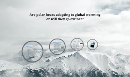 Are polar bears adapting to global warming or will they go e