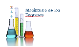 Biosíntesis de Terpenos
