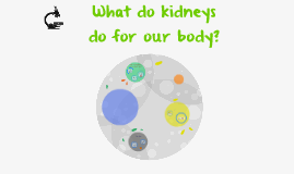 What do kidneys do for our body?