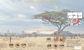 Copy of Unit 1: Lecture 1 - Food Chains and Food Webs