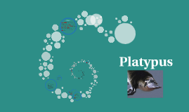 Copy of Platypus