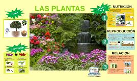 Tema 1: Las plantas