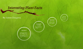 Interesting Plant Facts