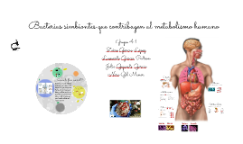 Bacterias simbiontes que contribuyen al metabolismo humano