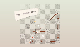 Pancreas and Liver