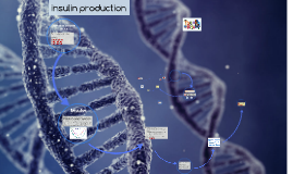 Production of human insulin