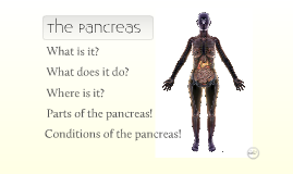 The Pancreas - more zoom