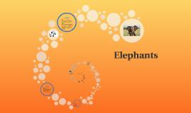 Copy of Elephants