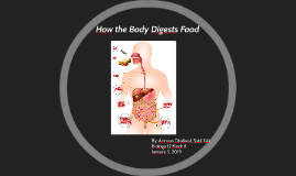 How the Body Digests Food