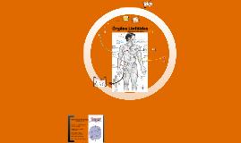 Órgão linfóides: Estrutura e funções