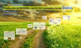 Copy of Producción de BIODISEL a partir de la Jatropha Curcas