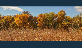 Prairie Renaissance