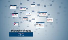 Hierarchy of Bone