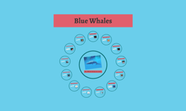 Copy of Blue Whales