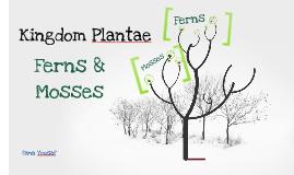 Kingdom Plantae (Ferns & Mosses)