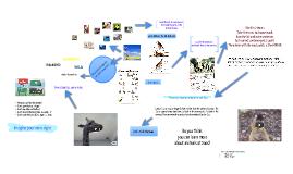 Copy of Animals