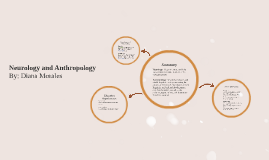 Neurology and Anthropology