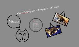 Kittens gered