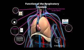 Copy of BTEC Sport Structure and Function of the Respiratory System
