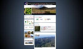 Musgos del valle morrénico de Mucubají, Parque Nacional Sier