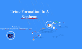 Urine Formation In A Nephron