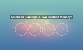 American Flamingo & Two Chained Monkeys